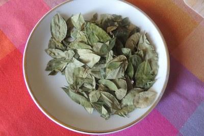 foglie coca
